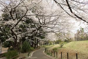 戸山公園2