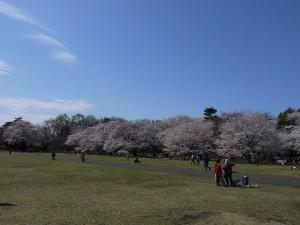小金井公園3