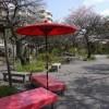 【東京都】お花見スポット!桜が綺麗な公園まとめ【その2】