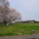【東京都】お花見スポット!桜が綺麗な公園まとめ【その1】