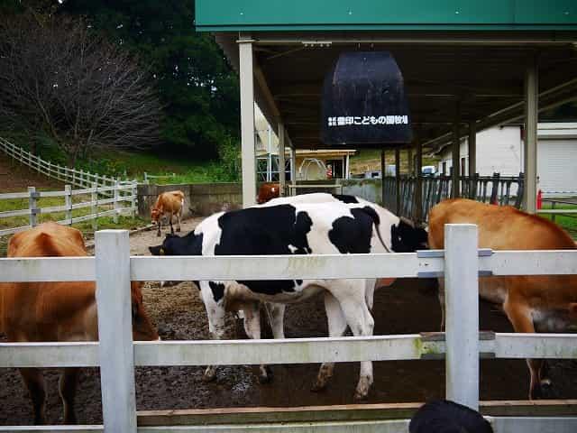 こどもの国 牛・羊の牧場