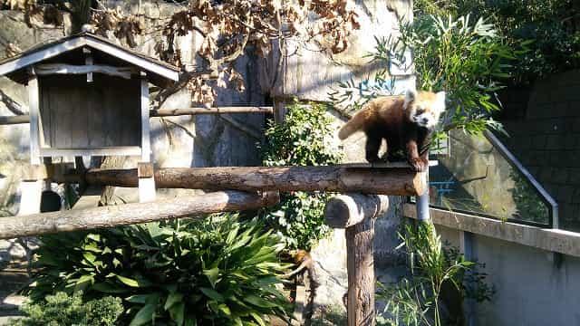 横浜市立野毛山公園 野毛山動物園 動物