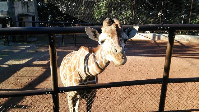 野毛山動物園 動物