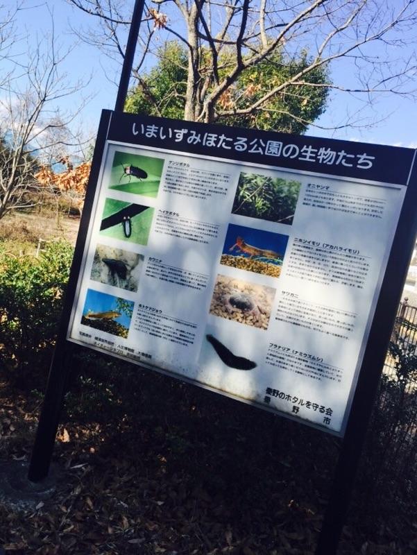 いまいずみほたる公園 公園 夏には、いろいろな種類の蛍が公園を舞うようです! 他にも、沢山の種類の生物が住んでいるようなので見つけてみるのも楽しいかも!しれません。