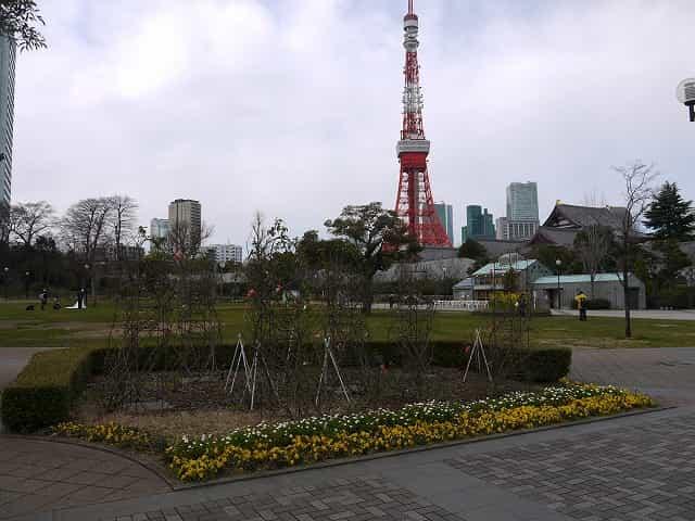 芝公園 芝生(多目的広場)