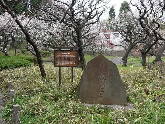 芝公園 銀世界の梅