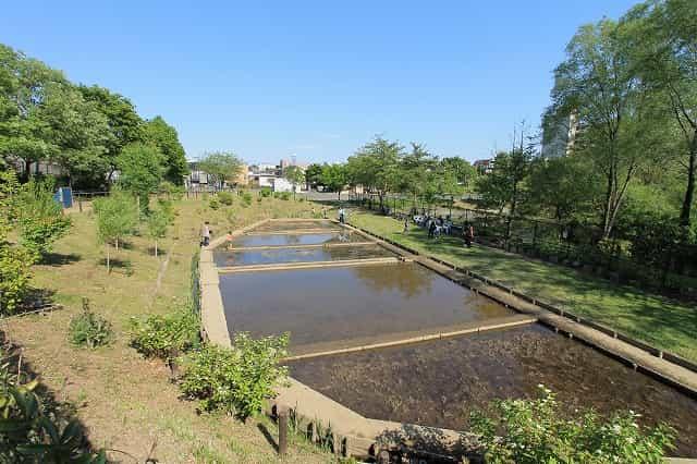 赤羽自然観察公園 稲田