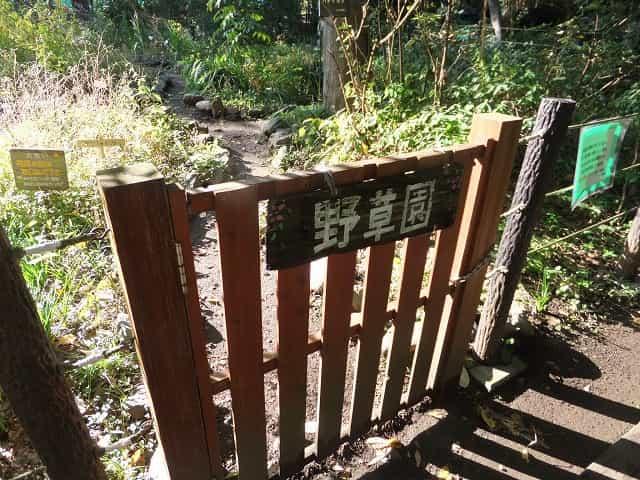 駒場野公園 野草園