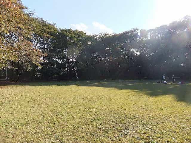 駒場公園 芝生広場