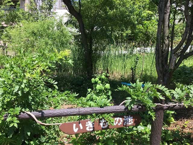 中目黒公園 いきもの池