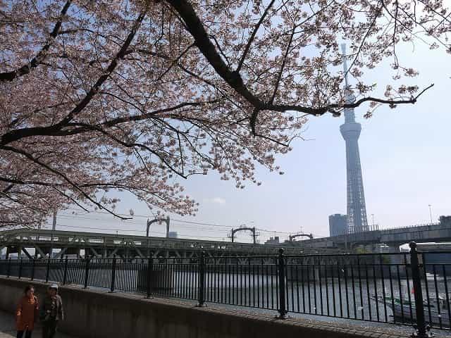 隅田公園(台東区) 桜まつり