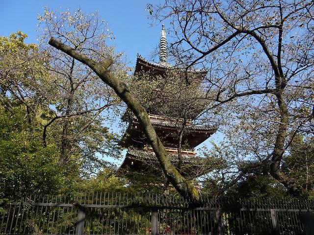 上野恩賜公園 五重塔