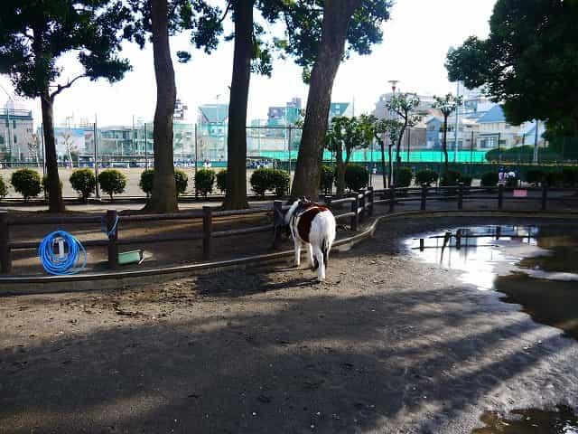 東板橋公園・こども動物園 ポニー乗り場