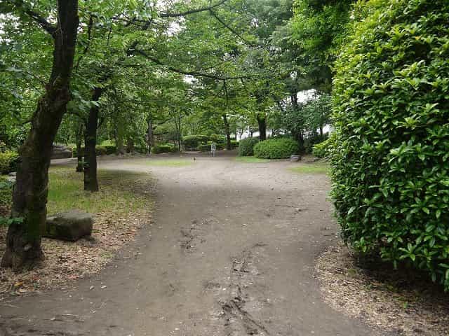 隅田公園(墨田区) 芝生広場