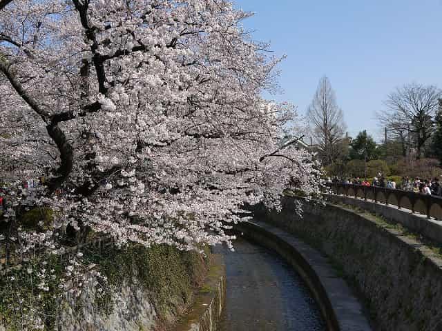 哲学堂公園 哲学堂公園の桜