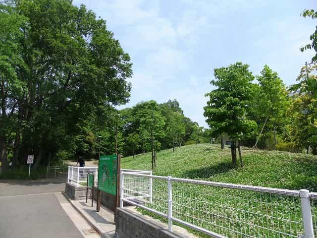 江古田の森公園 ハナミズキの丘