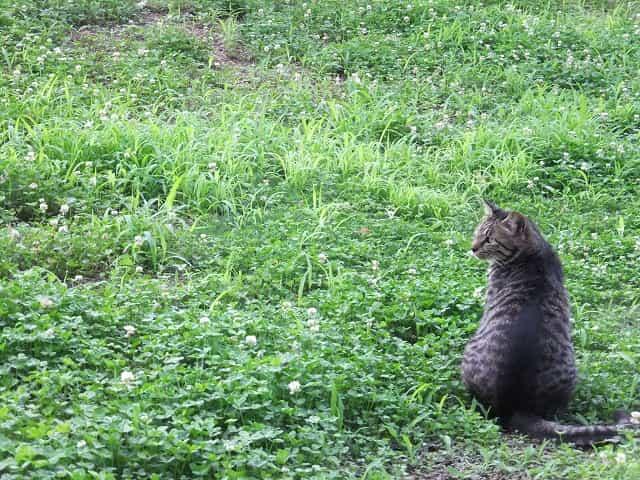 江古田の森公園 江古田の森の猫