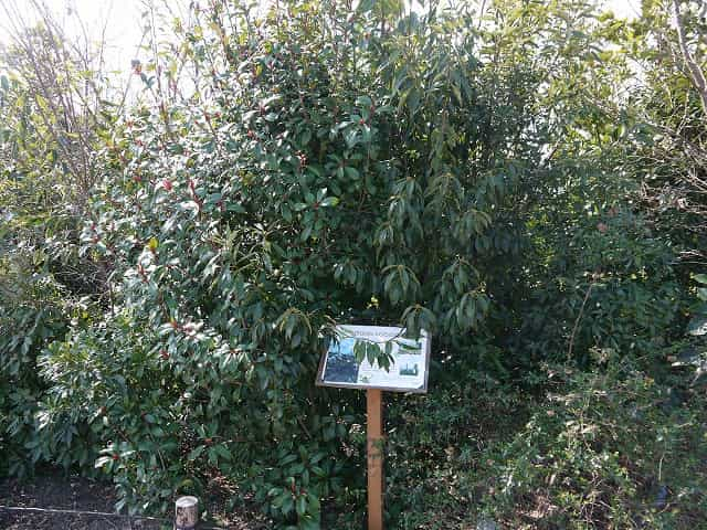 二子玉川公園 世田谷いのちの森