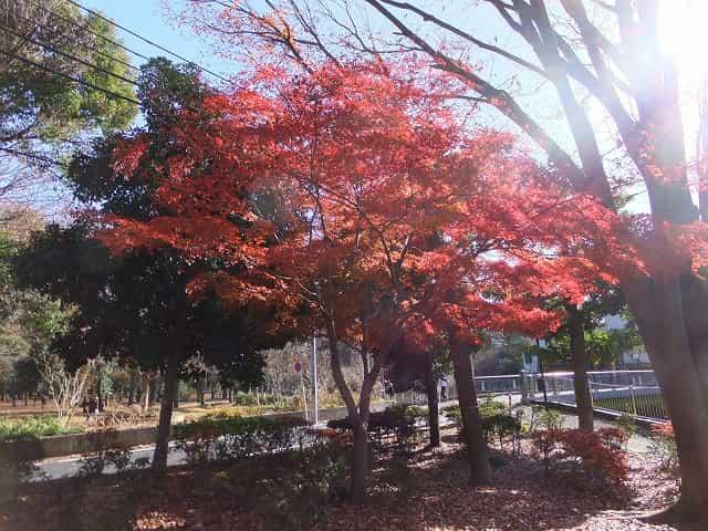 和田堀公園 紅葉
