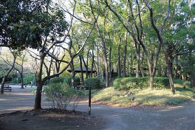 しながわ区民公園 桜の広場