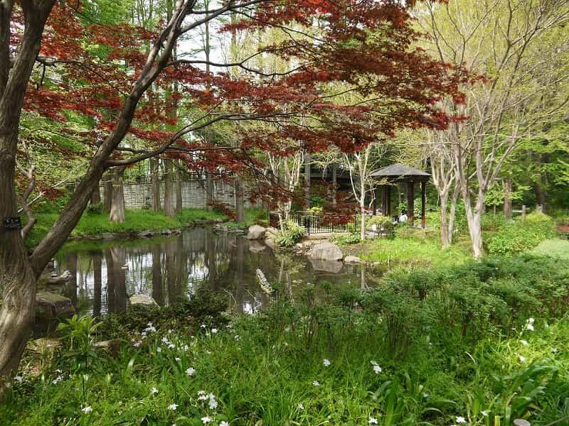 林試の森公園 ラクショウの森・池・流れ