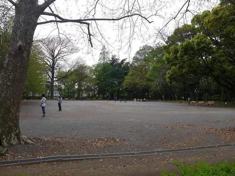 林試の森公園 プラタナスの広場・クスの森 プラタナスの広場