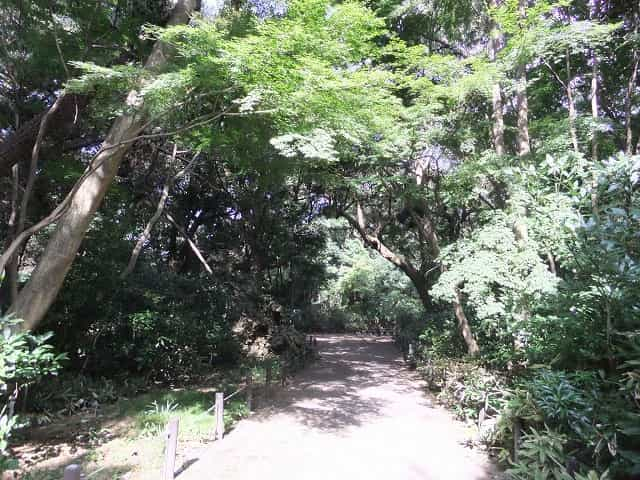 附属自然教育園 路傍植物園