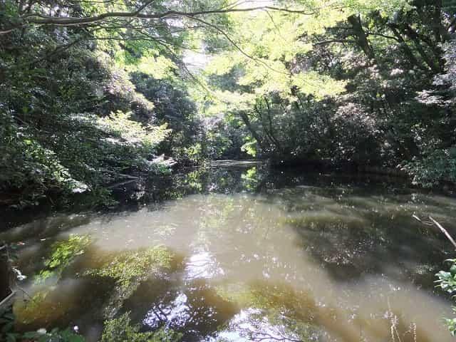 附属自然教育園 ひょうたん池