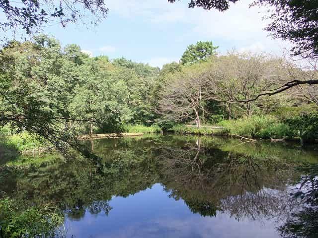 附属自然教育園 水生植物園