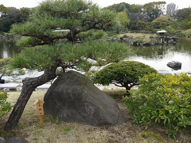 清澄庭園 名石