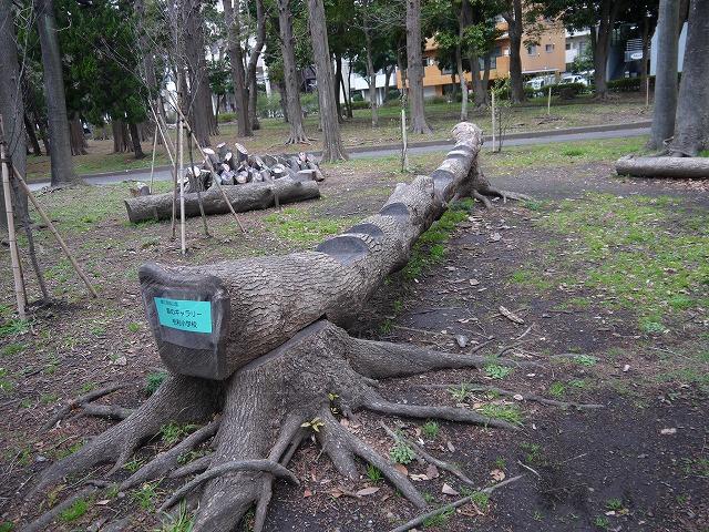 猿江恩賜公園 森のギャラリー