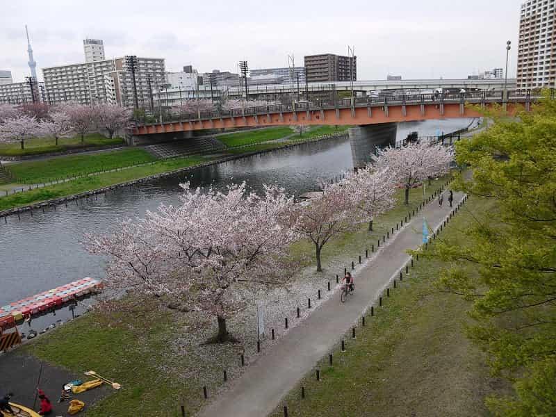 大島小松川公園 さくら大橋・もみじ大橋 もみじ大橋