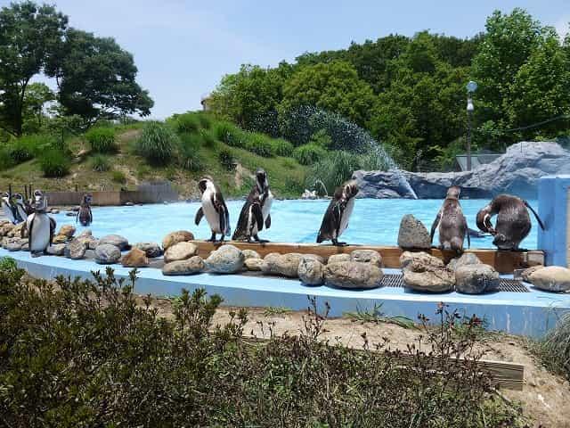 こども動物自然公園 ペンギンヒルズ