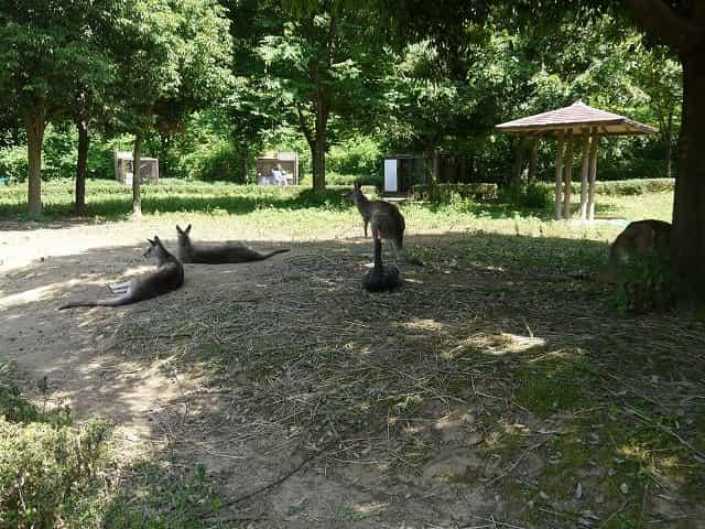 こども動物自然公園 カンガルーコーナー