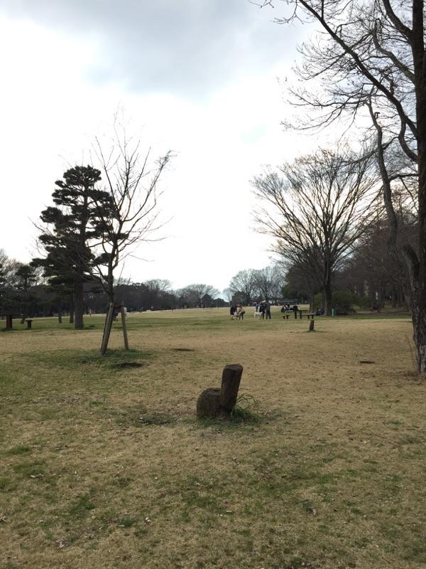 県立相模原公園 芝生広場・森の木展望台・イベント広場 広い広場では何をするのも広くて安心!犬を放し飼いにする事は禁止なのでご注意ください!