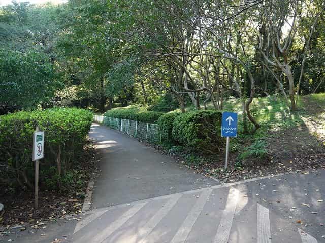 砧公園 サイクリングコース