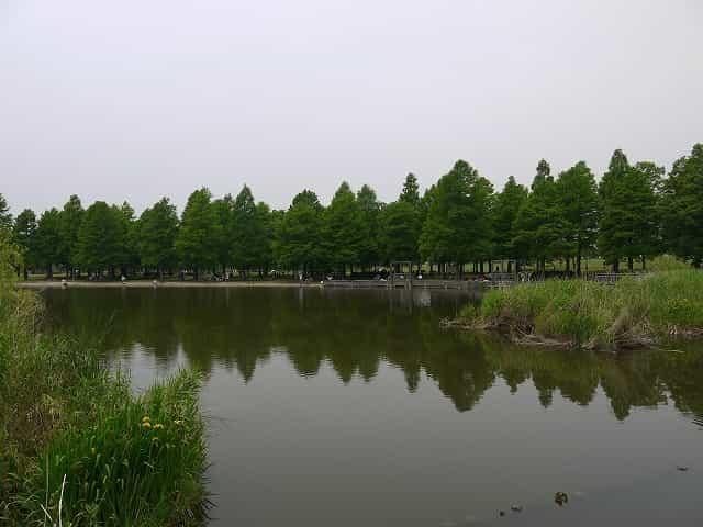 舎人公園 大池