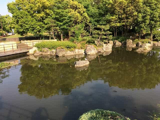 葛西臨海公園 蓮池