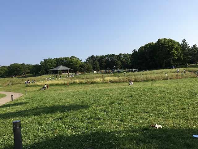 葛西臨海公園 芝生広場