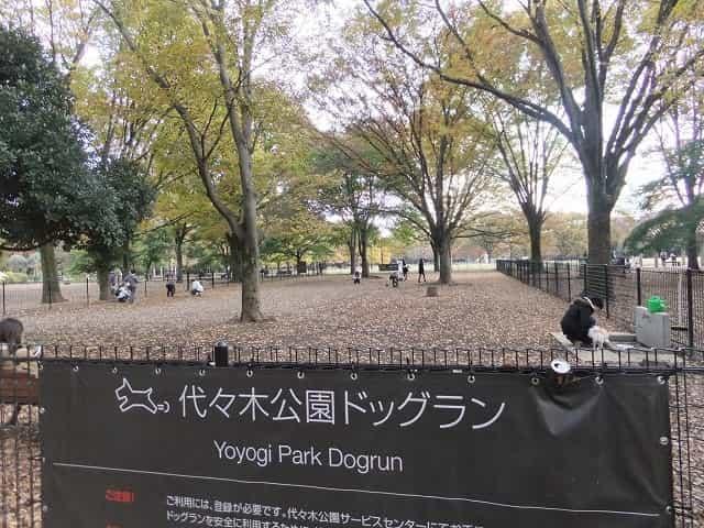 代々木公園 ドックラン