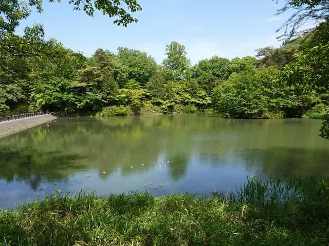 狭山公園  宅部池(たっちゃん池)