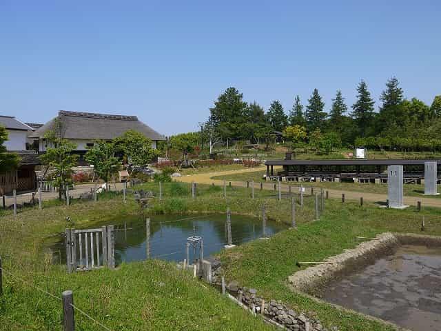 昭和記念公園 こもれびの里