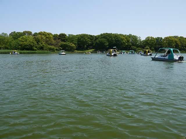 昭和記念公園 水鳥の池