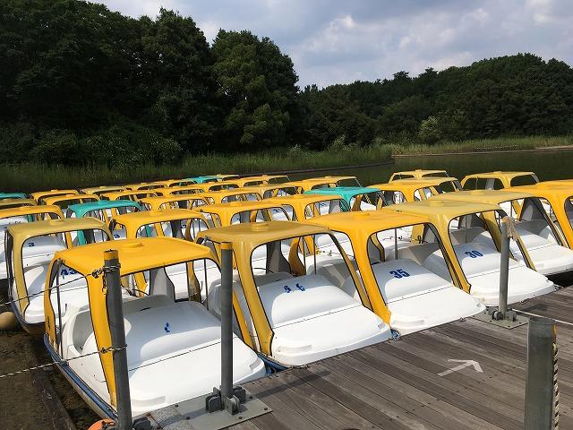 水鳥の池 サイクルボート