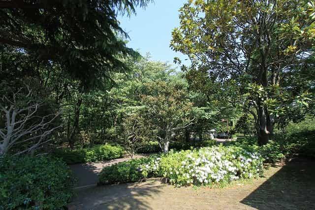 大泉中央公園 野鳥の森