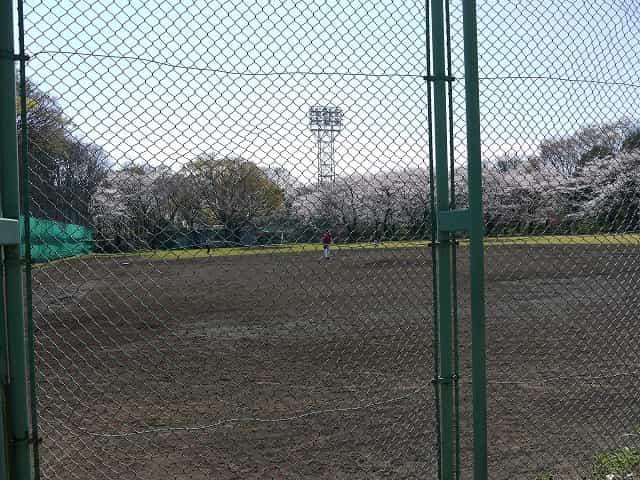 石神井公園 野球場