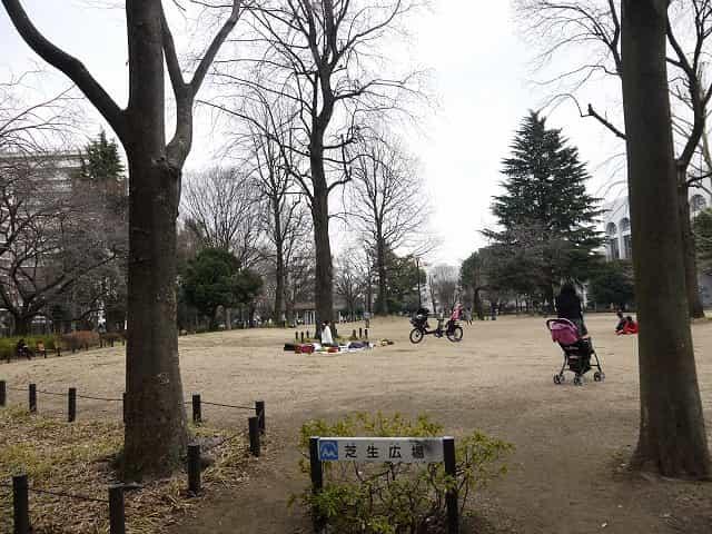 戸山公園(大久保地区) 芝生広場