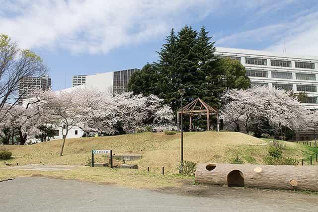 戸山公園(大久保地区) 桜