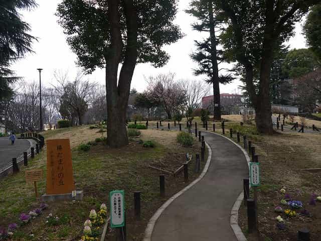 戸山公園(大久保地区) 陽だまりの丘