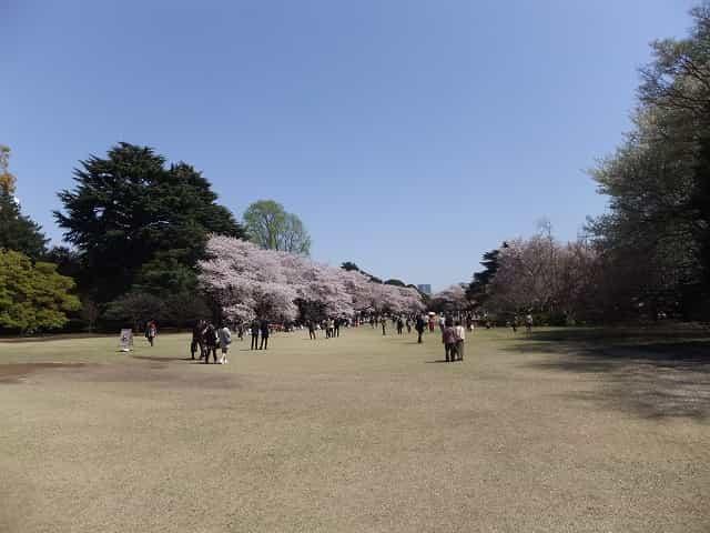 新宿御苑 新宿御苑の桜 お花見客でいっぱいの芝生の広場。ピクニックに最適です。